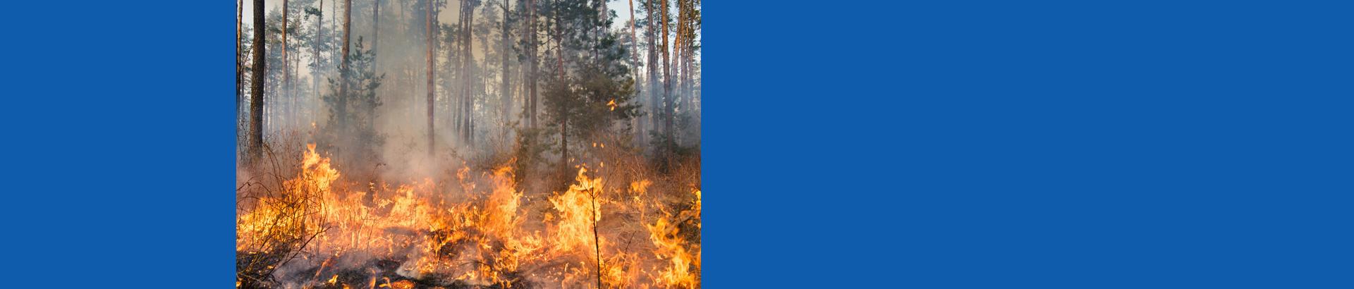 bushfire-front-1